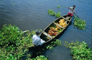Kerala Piantagioni, backwaters e relax