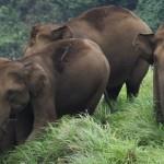Flora e Fauna in India